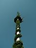 Maibaum aufstellen 2009_88