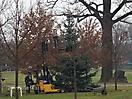 Weihnachtsbaum aufstellen 2008_46