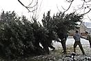 Weihnachtsbaum aufstellen 2010_6