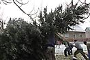 Weihnachtsbaum aufstellen 2010_7