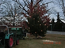 Weihnachtsbaum aufstellen 2012_1