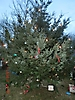 Weihnachtsbaum aufstellen 2012_6