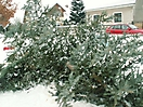 Weihnachtsbaum verbrennen 2010_1