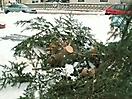 Weihnachtsbaum verbrennen 2010_2