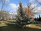 Weihnachtsbaum verbrennen 2012_1