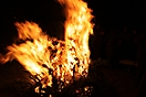 Weihnachtsbaum verbrennen 2012_26