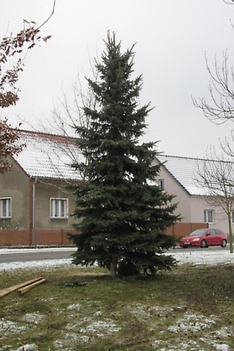 Wann Weihnachtsbaum Aufstellen.Krieschow De Die Seite Zum Dorf Galerie Kategorie 2010 Bild